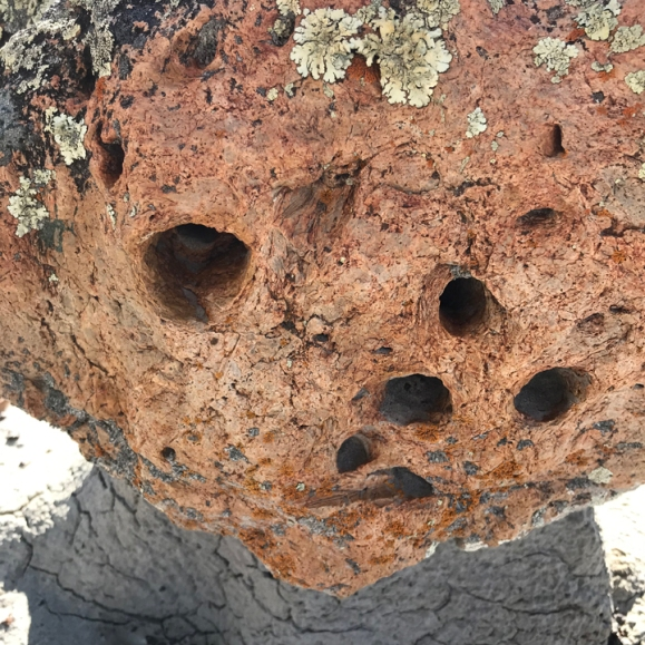 Silcrete hoodoo with root cast holes and lichen